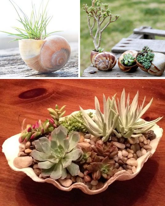 24-Creative-Garden-Container-Ideas-Use-shells-for-small-plants-22