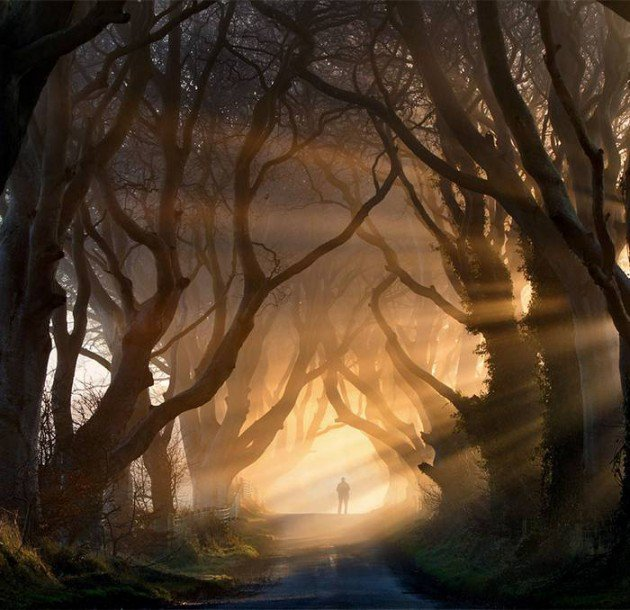 10-Startling-Tree-Tunnels-You-Must-Walk-Through-5-630x610