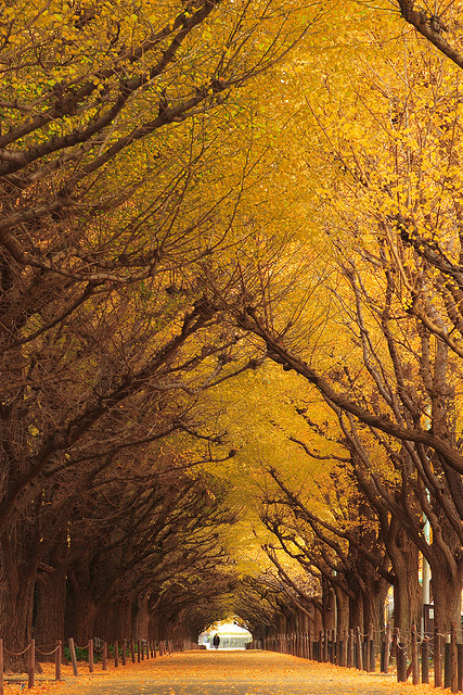 gingko-tree-tunnel