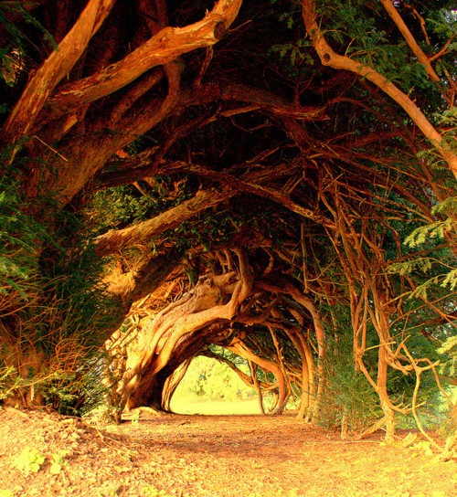 yew-tree-tunnel